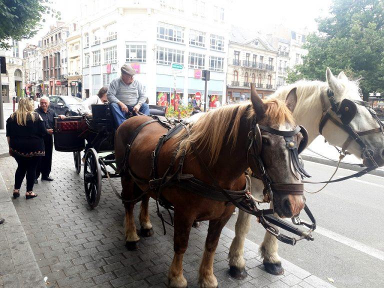 Balade en calèche dans Douai